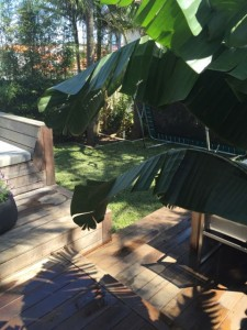 Outdoor   Catmint Interior Design